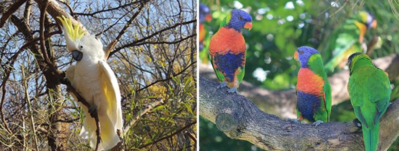tropische vogels in tropisch Queensland