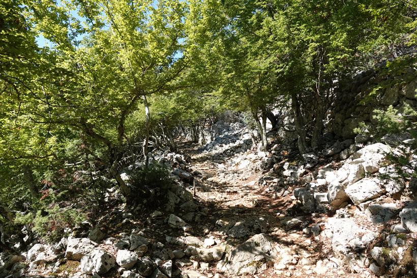 wandelpad onder de bomen in Beli