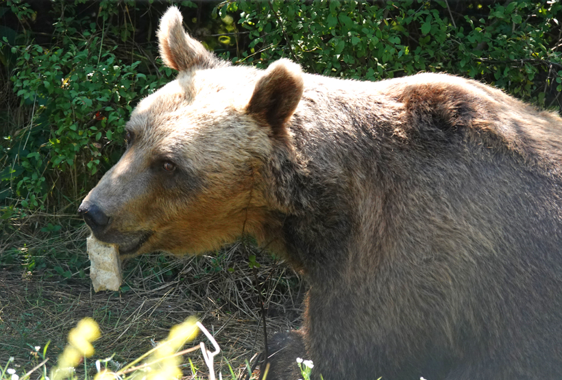 beer in opvangcentrum Kuterevo eet