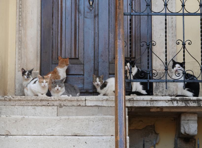 katten wachten voor deur van huis