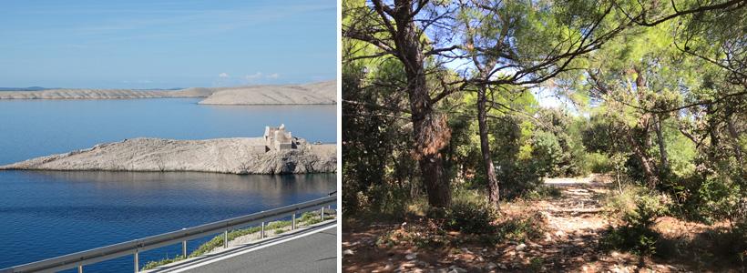 kaal eiland Pag en bomen in Simuni