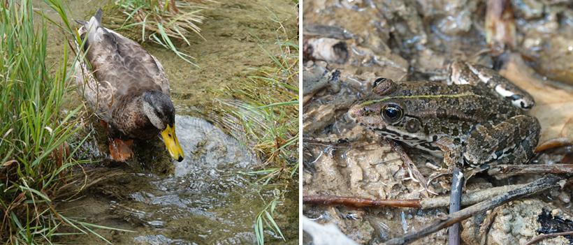 dieren aan watervallen Krka