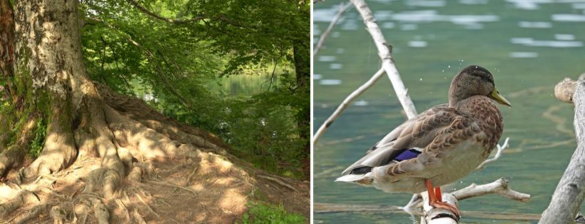 bomen en dieren aan watervallen Plitvice