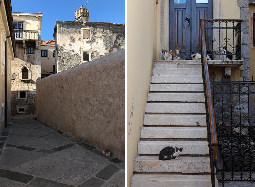 oude steeg met katten in Senj