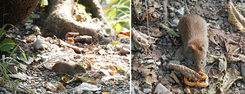 muisjes in Plitvice nationaal park