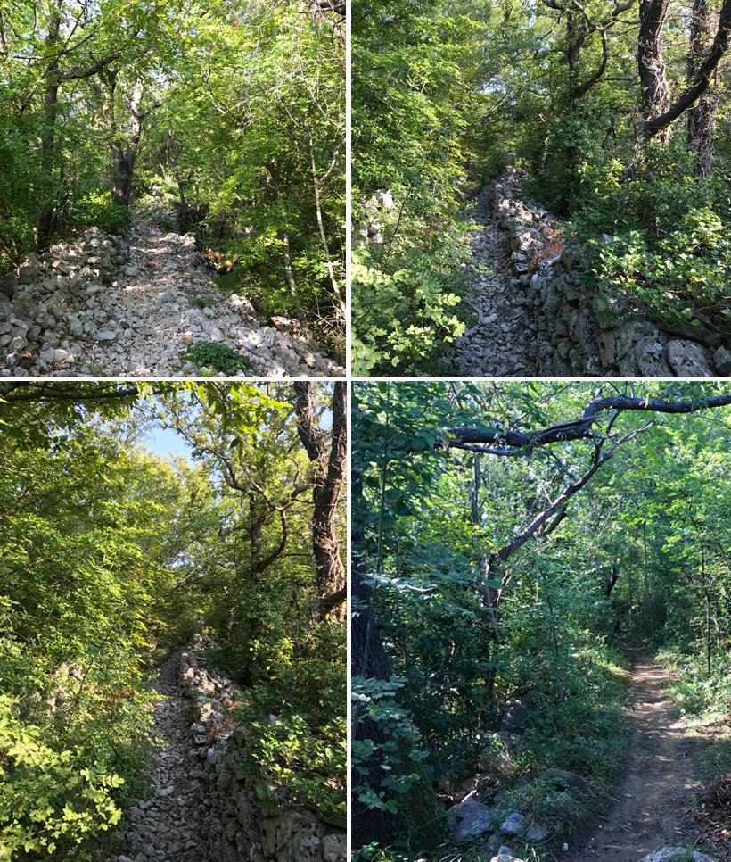 wandeling onder de bomen in Lokvisce