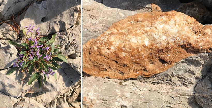 rotsbloemen en kwarts aan de Adriatische kust