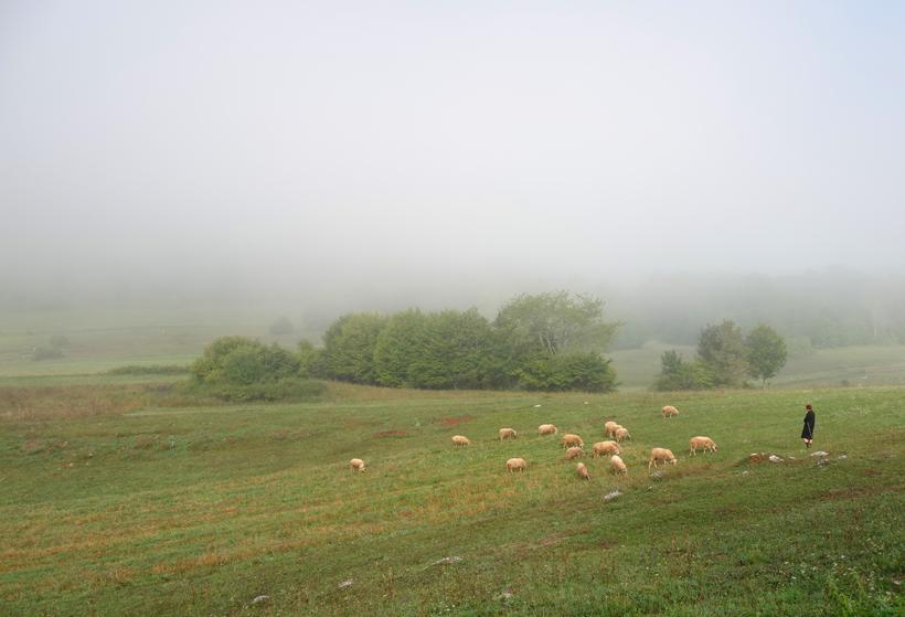 schapenhoedster onderweg naar Kuterevo Kroatië