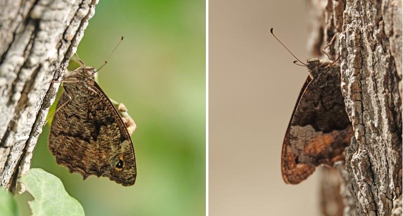 vlinders aan watervallen krka