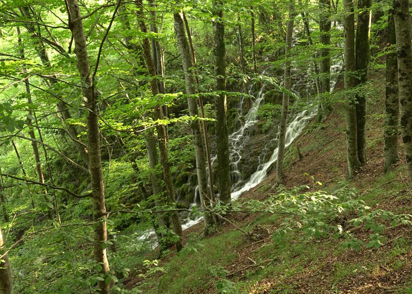 waterval onder de bomen in Plitvice