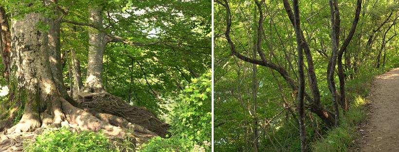 natuur in Plitvice nationaal park