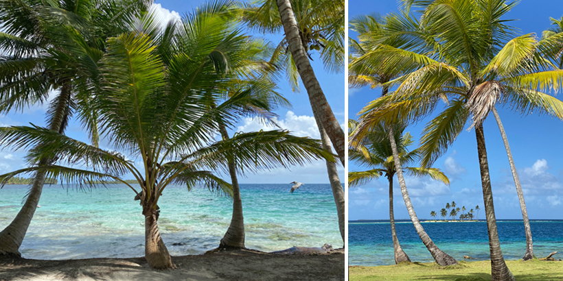 pelikanen en palmbomen in San Blas