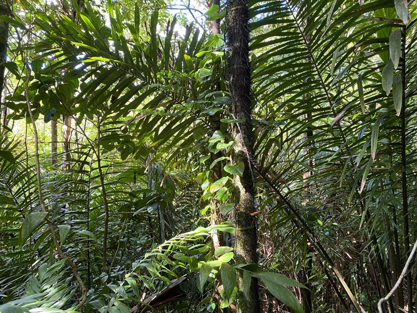regenwoud in Panama
