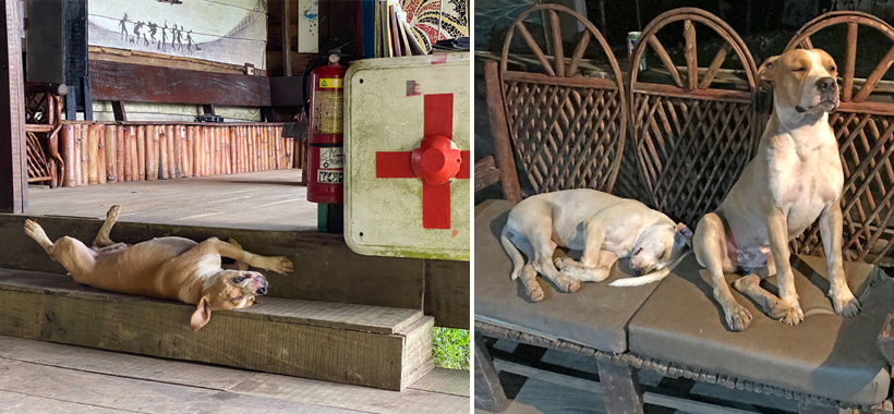 honden in Pachamama