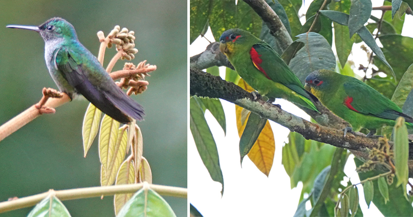 vogels in la Republica Pachamama