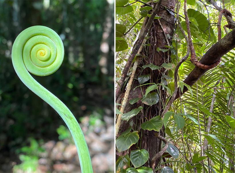 planten in regenwoud San Blas Mountains