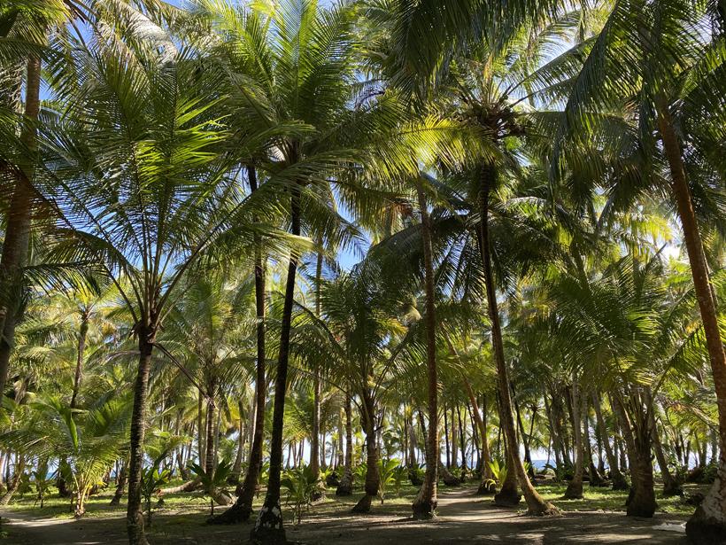 palmboompark op eiland Naranajo Chico in San Blas