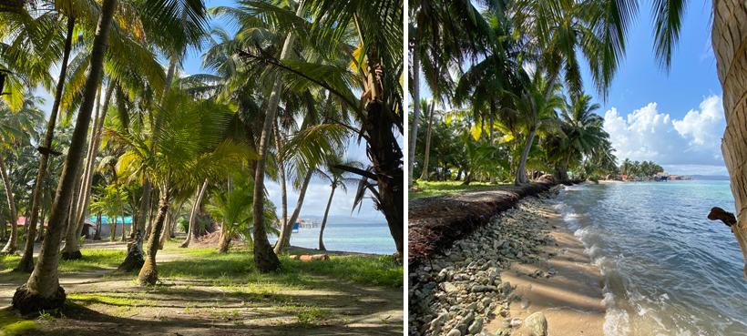 Palmbomen en eilandrand met keien op Naranjo Chico San Blas