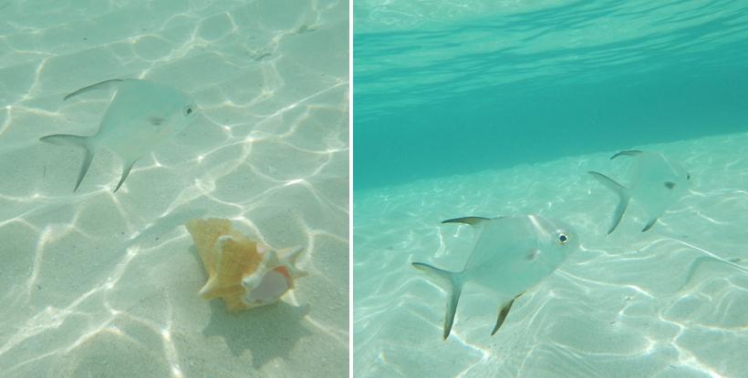 vissen in helder en ondiep water Dutch Cays San Blas