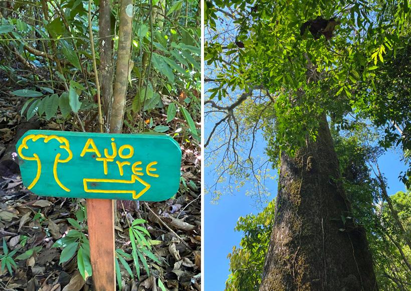 boom langs wandelpad naar playa arco