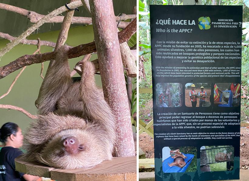 opvang voor luiaards in gamboa