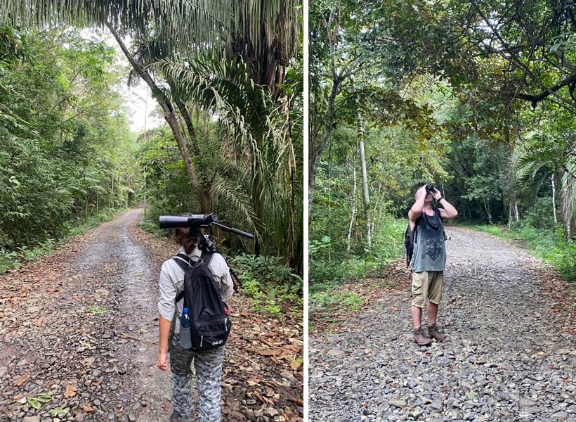 birdwatching Gamboa pipeline trail
