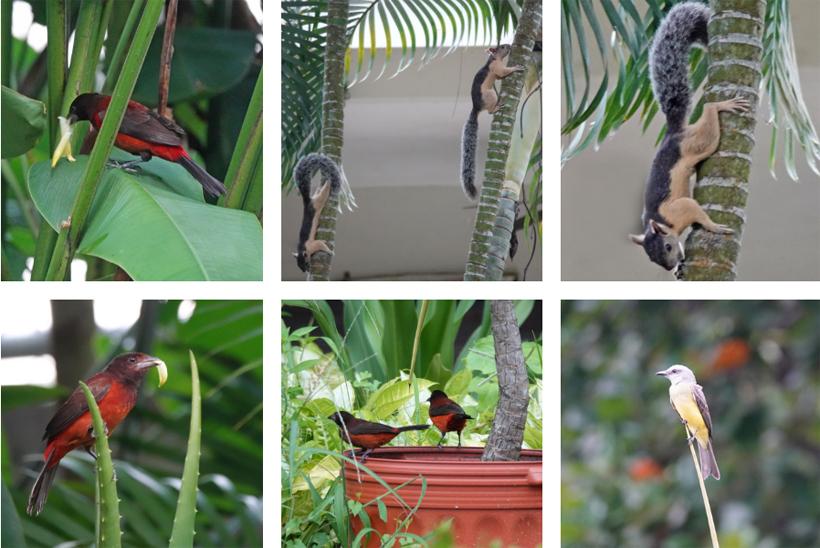 vogels en wildlife in panama city