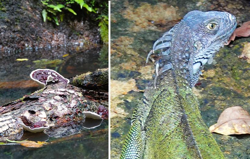 flora en fauna oevers panamakanaal