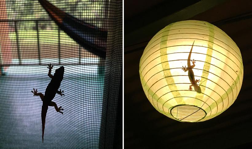 gekko's in de kamer in Jungle Land