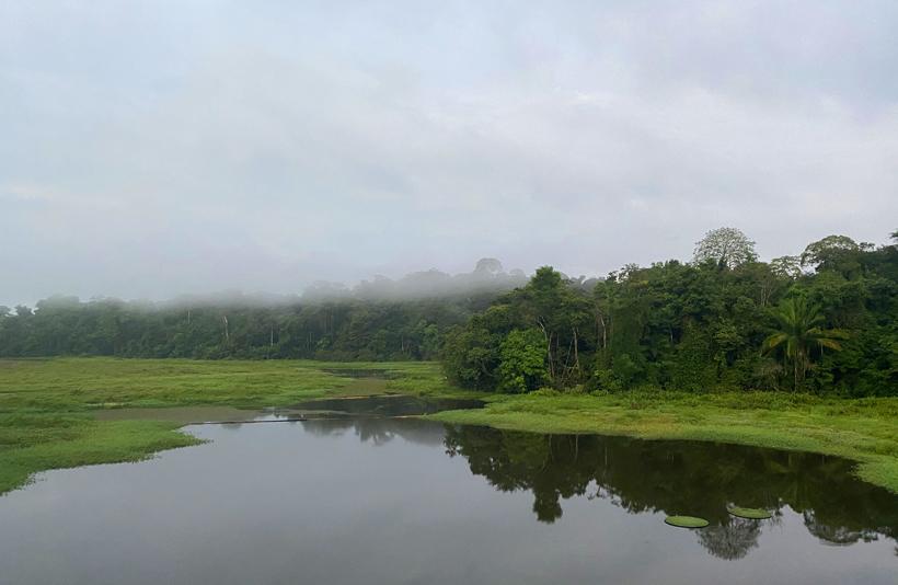 nevel boven de jungle in de ochtend aan Jungle Land