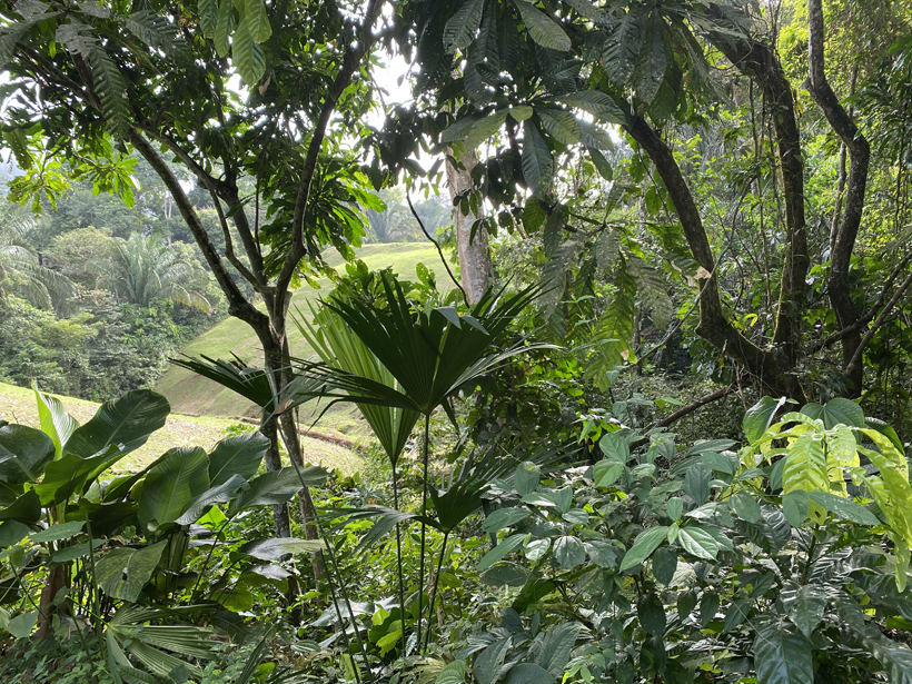 start wandeling pipeline trail Gamboa