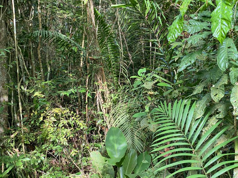 groen regenwoud in Gamboa