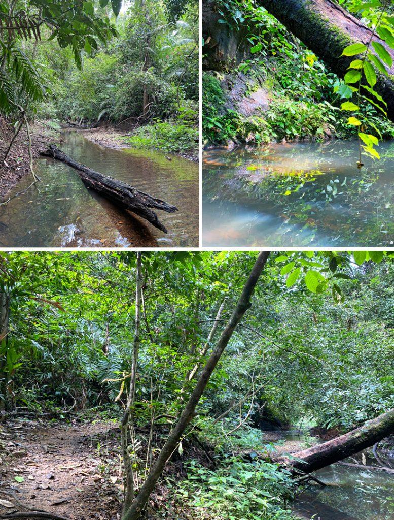 rivier en wandelpad in jungle tijdens kajak Jungle Land