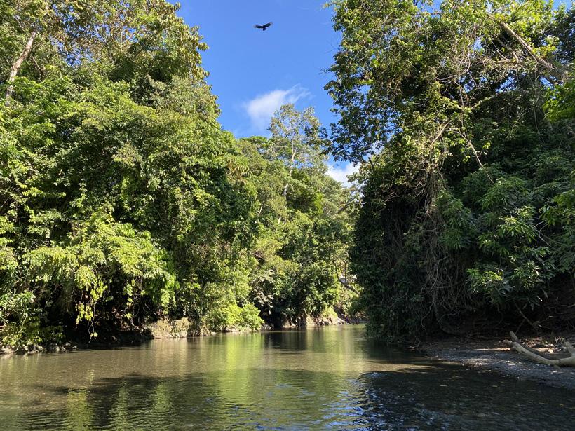 wandeling in de rio claro in pavones