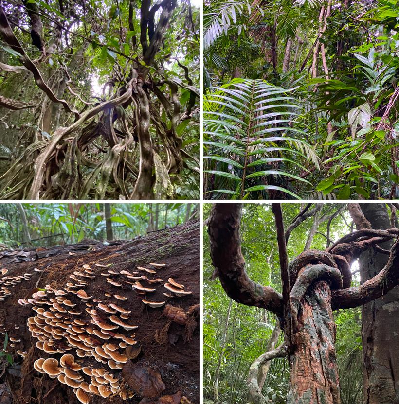 grillige stammen en lianen in regenwoud Panama