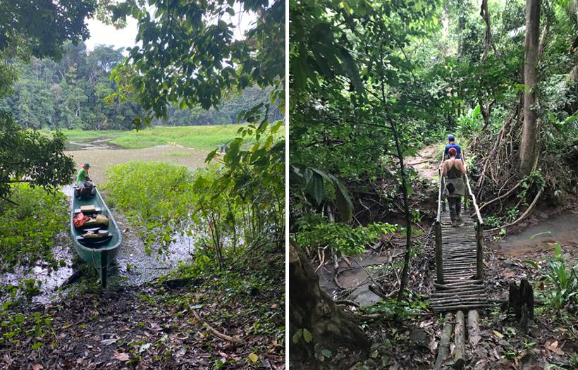 wandeling in het regenwoud langs oever bij Lake Gatun