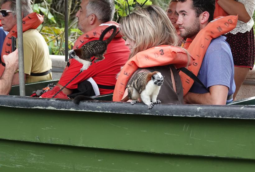 tamarin aapjes in boot met toeristen jungle land