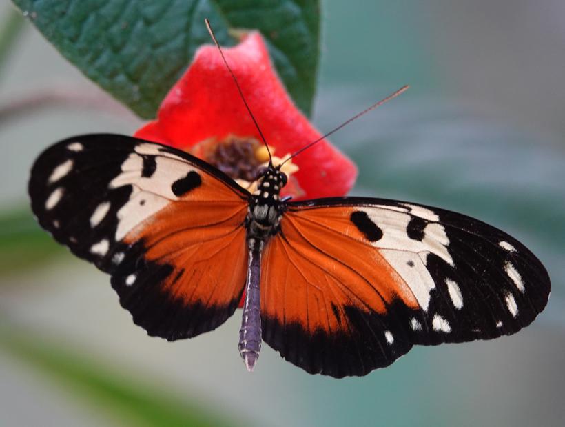 vlindertuin gamboa