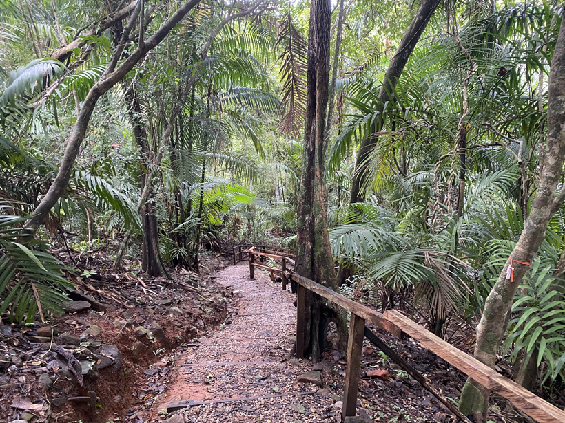 wandeling metropolitan park in panama city