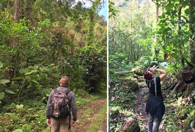 birdwatching pipeline trail in boqueten