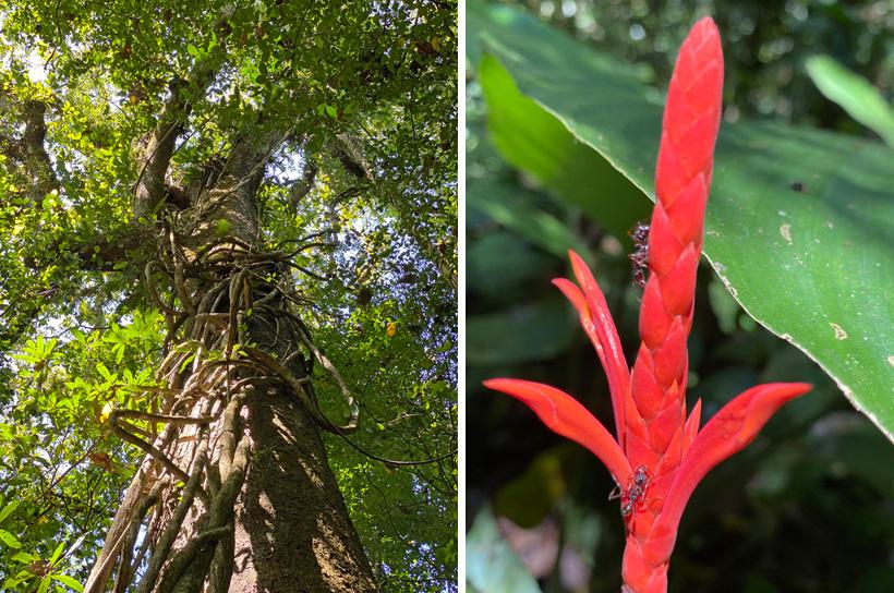 weelderige vegetatie carara nationaal park