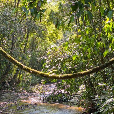 Tárcoles en Carara Nationaal Park