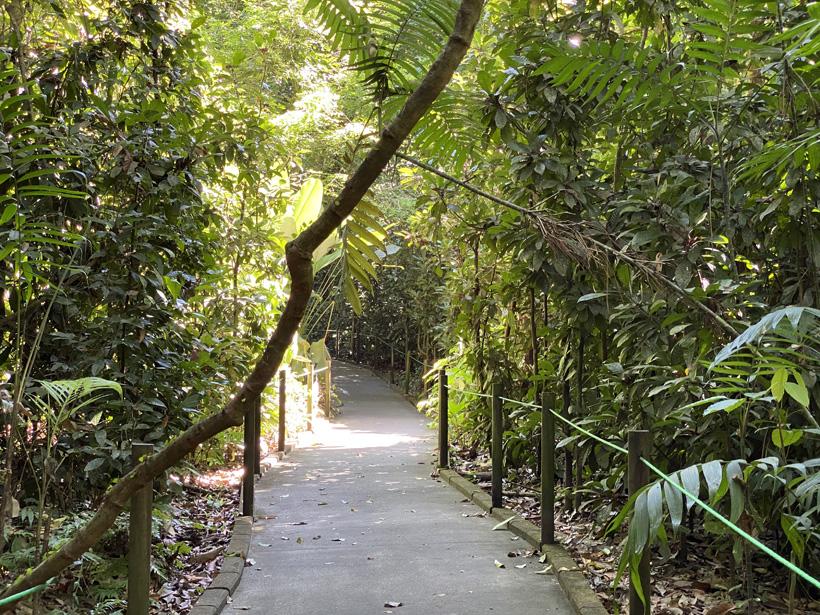 asfalt wandelpad carara nationaal park