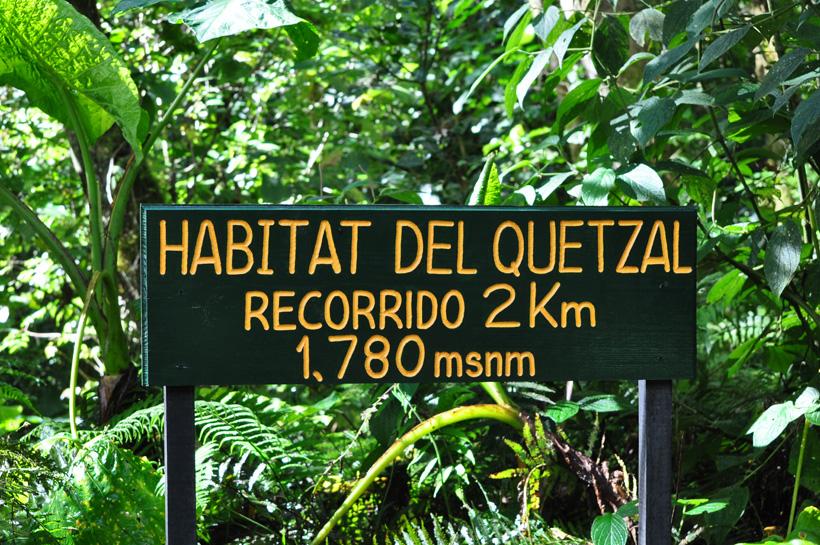 quetzal spotten in boquete