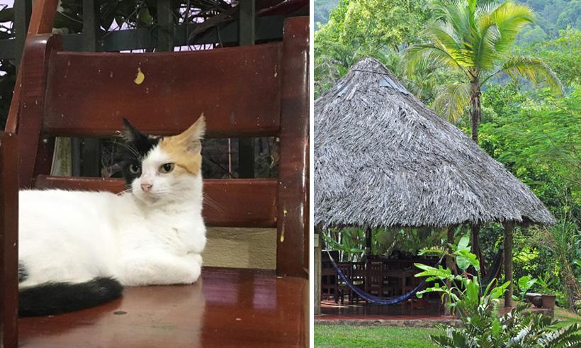 kat en ontbijtterras in Golfito