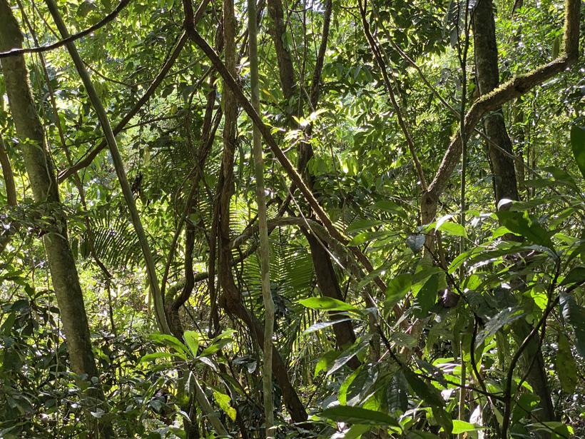 regenwoud carara nationaal park