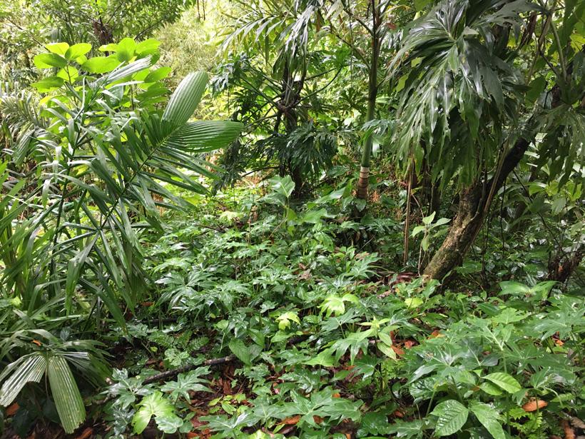 groene jungle isla colon