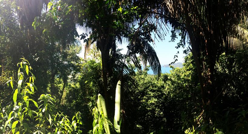 uitzicht langs sendero mirador in manuel antonio nationaal park