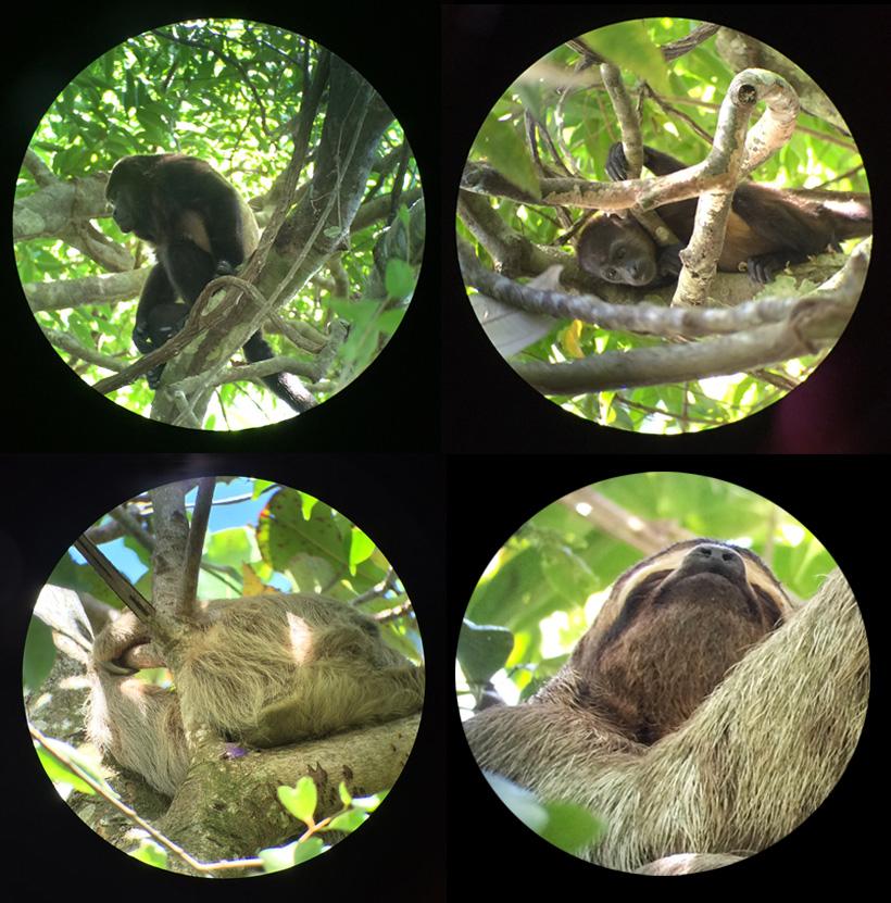 wildlife door telescoop gids in manuel antonio nationaal park