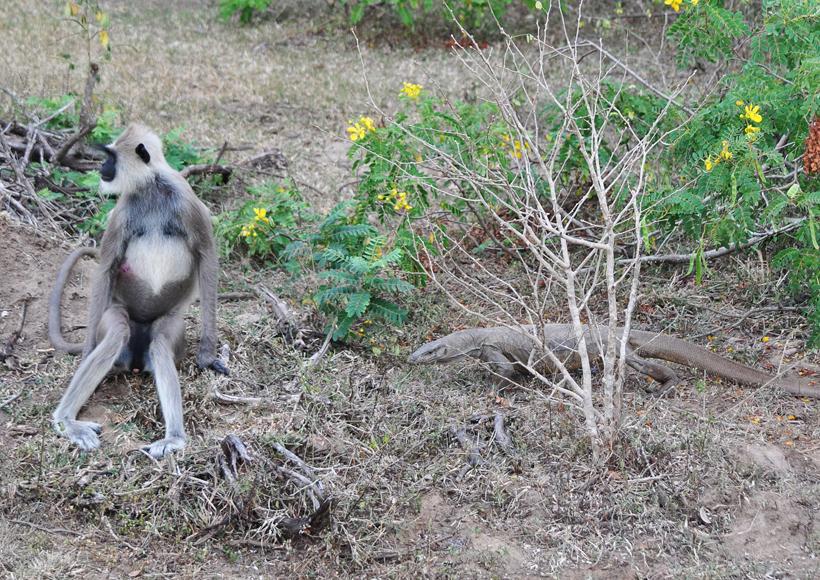 wildlife in Bundala Nationaal Park